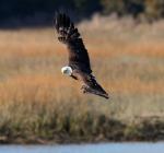 Eagle Story 03