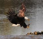 Eagle Story 04