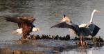 Eagle Story 06