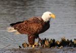 Eagle Story 07