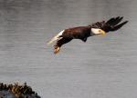 Eagle Story 09