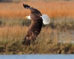Eagle Story 10