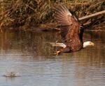 Eagle Story 11