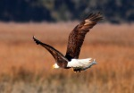 Eagle Story 13