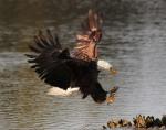 Eagle Story