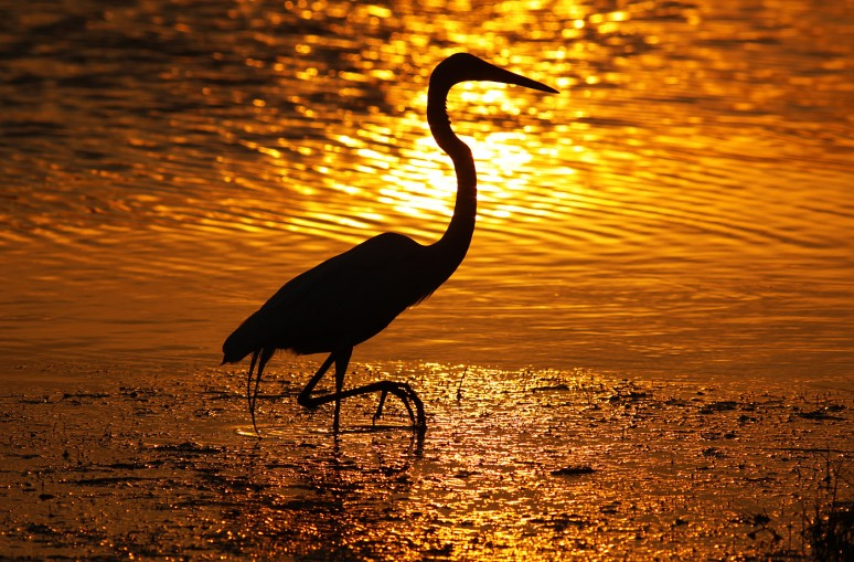 GBH Sunset Silhouette