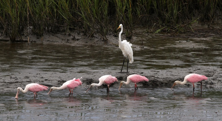 Spoonbills and Radar