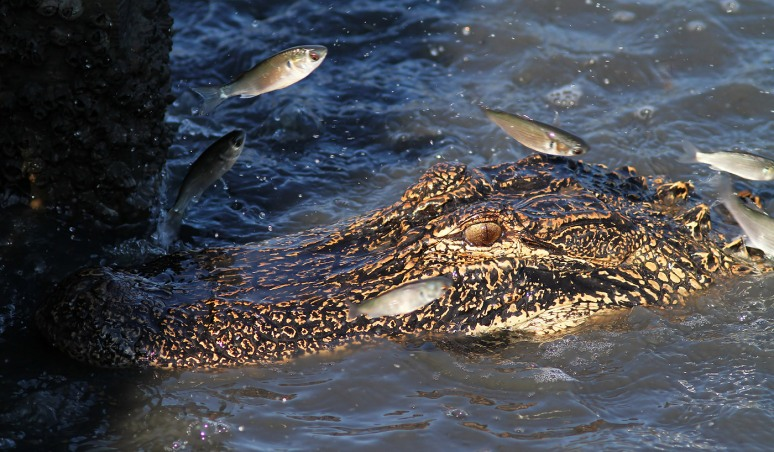 Flying Fish in the Salt Marsh