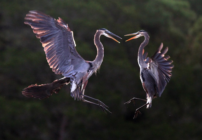 GBH Battle in Mid Air