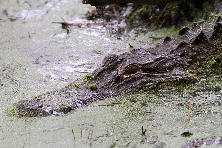 Mrs A and Babies in the Swamp