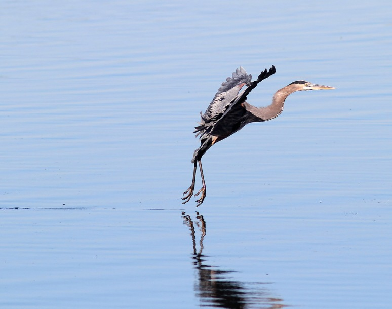 GBH Touch and Go Landing