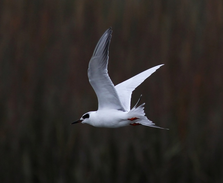 Tern Fishing and Shaking Off