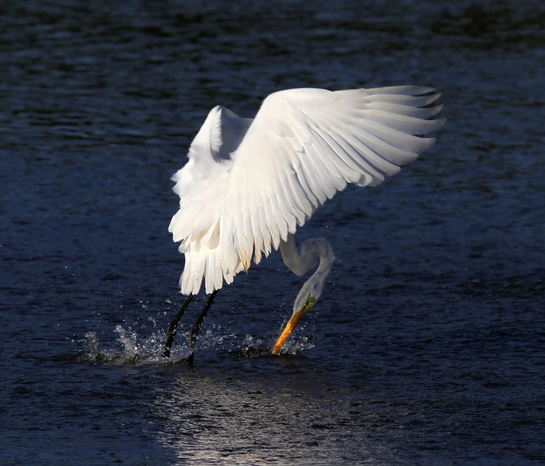 Egret Puts on the Breaks