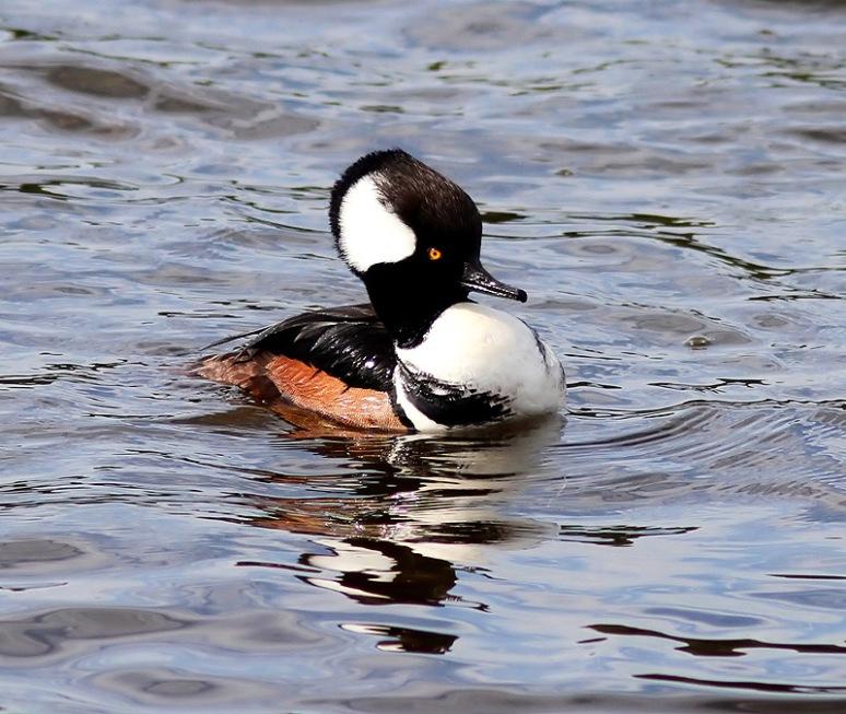 Hoodie in the Marsh Pond