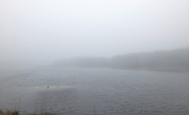 Fog at the Marsh Pond