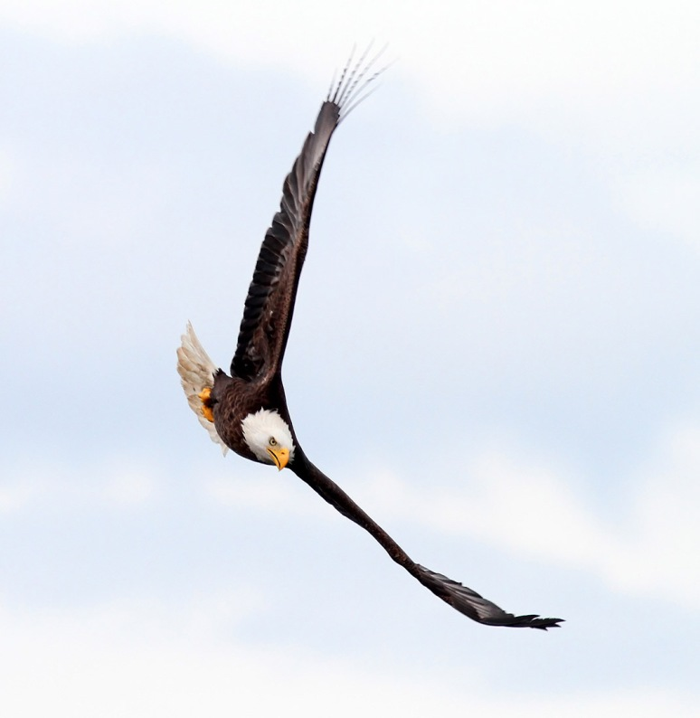 Eagle Comes Swooping In