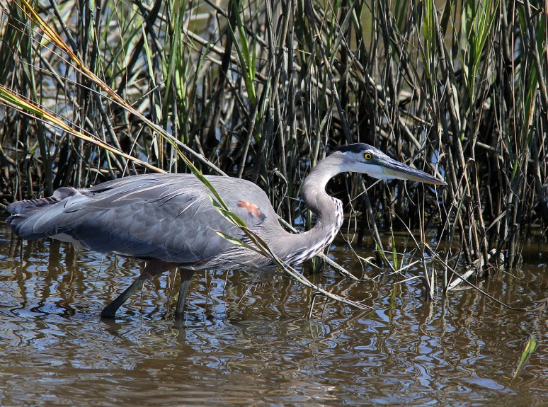 GBH in Stealth Mode