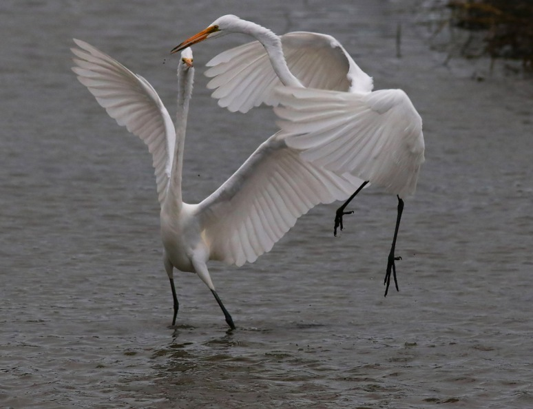 Egret Disagreement