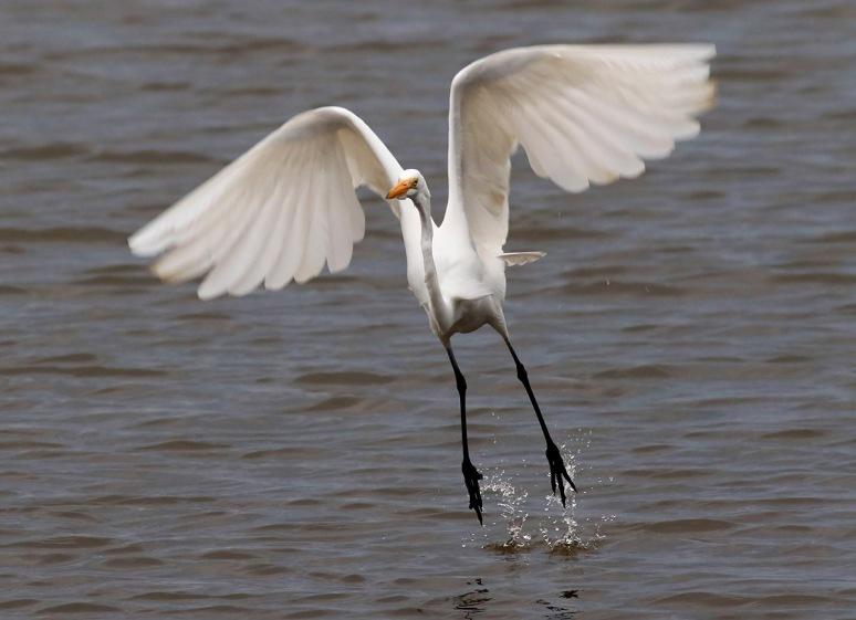 Egret Jump Off
