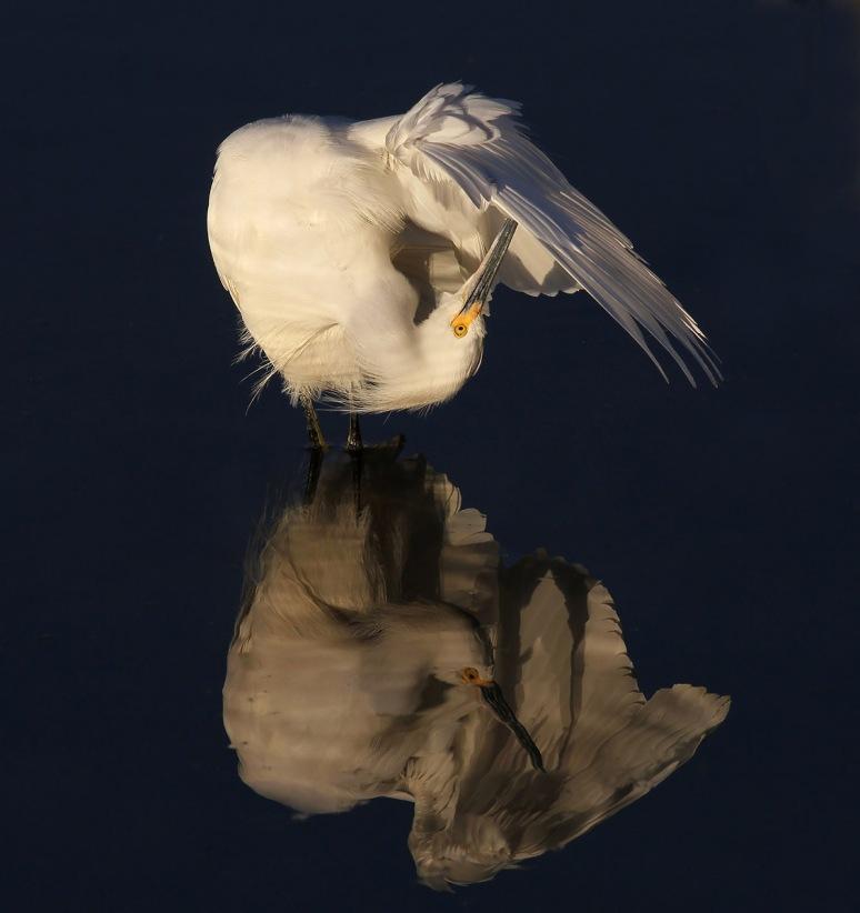 Wing Maintanence