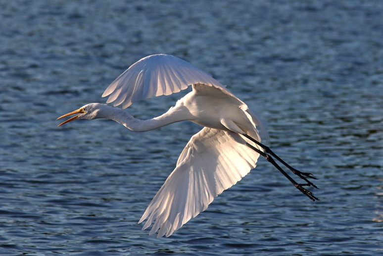 Egret Leaves His Friends