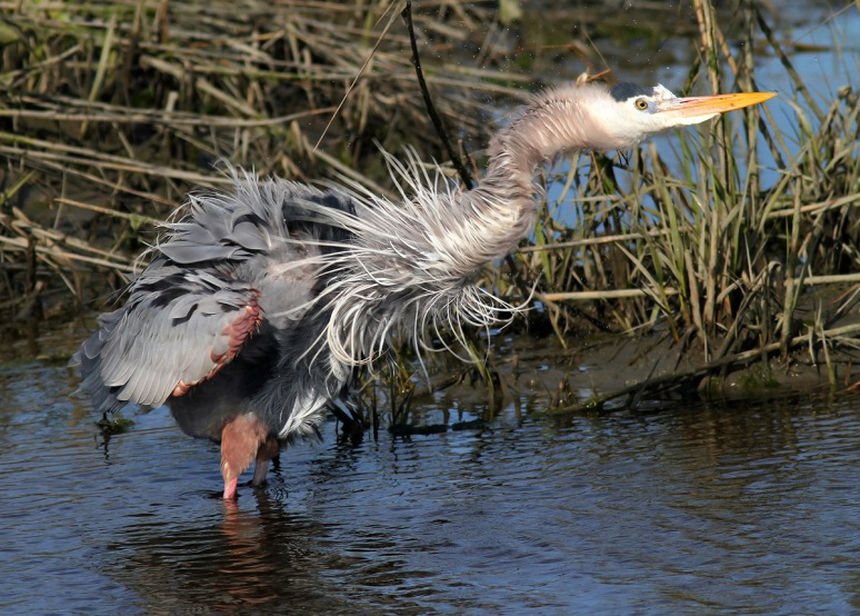 GBH All Fluffed