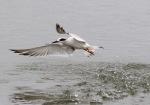 Terns at the SaltMarsh