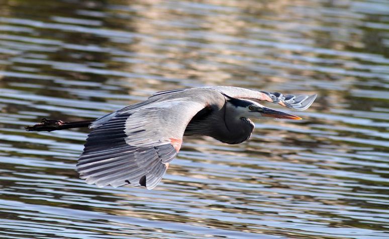GBH Late Afternoon Flight