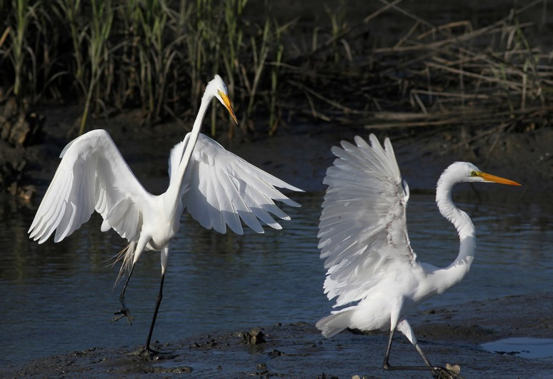 Egret Gets Chased
