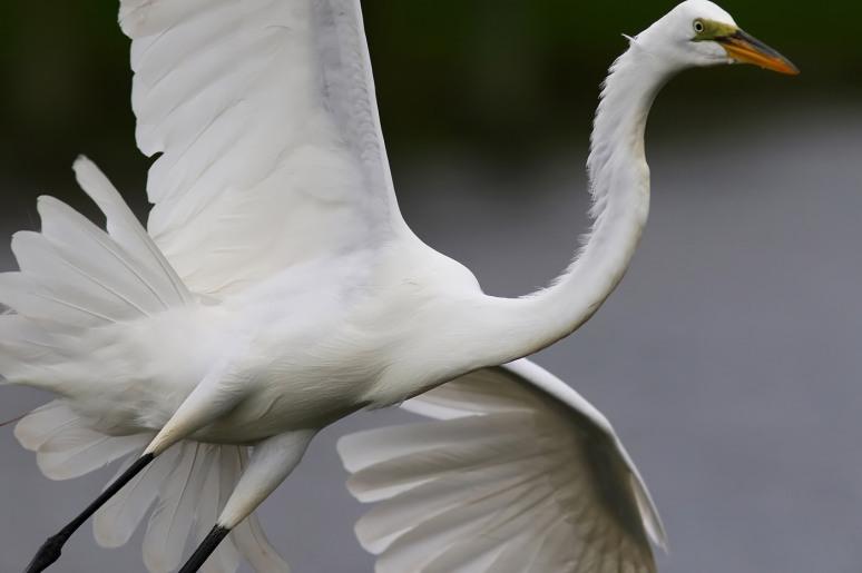 Egret Pop Up