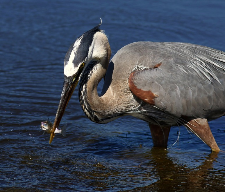 GBH Gets Quick Breakfast