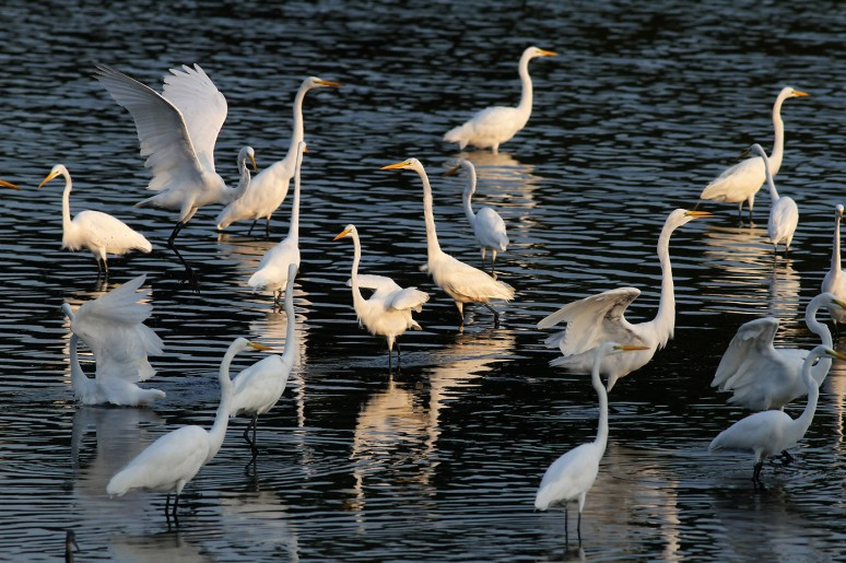 Egret Convention