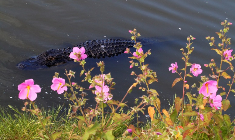 Alligator with Flowers