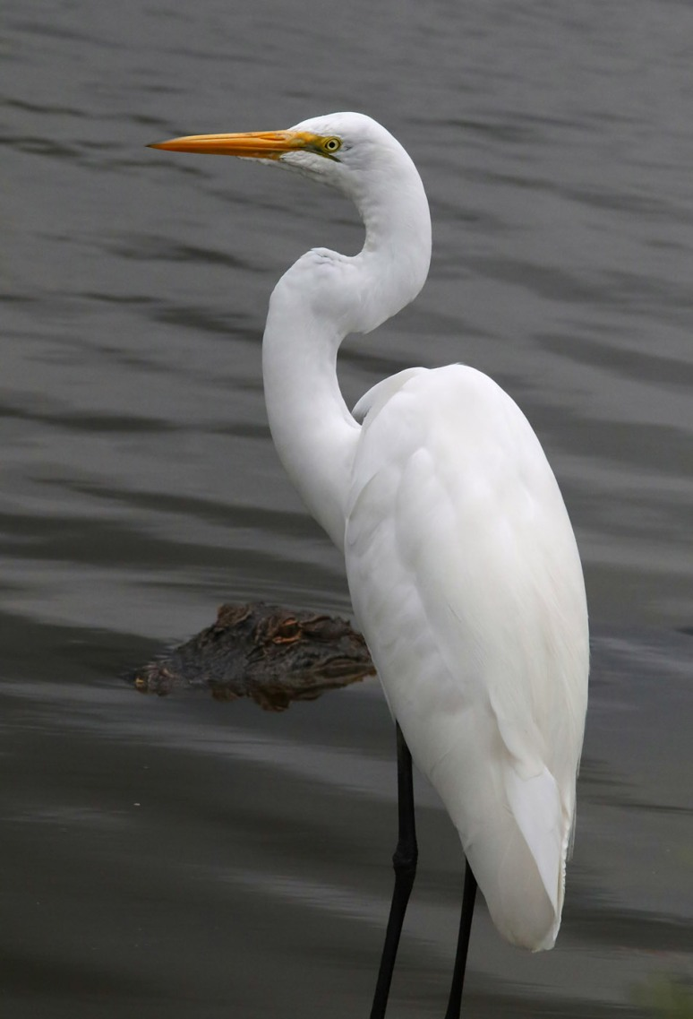 Egret and Friend