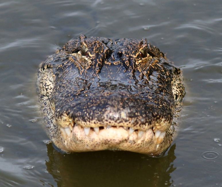 Nice Toothy Grin