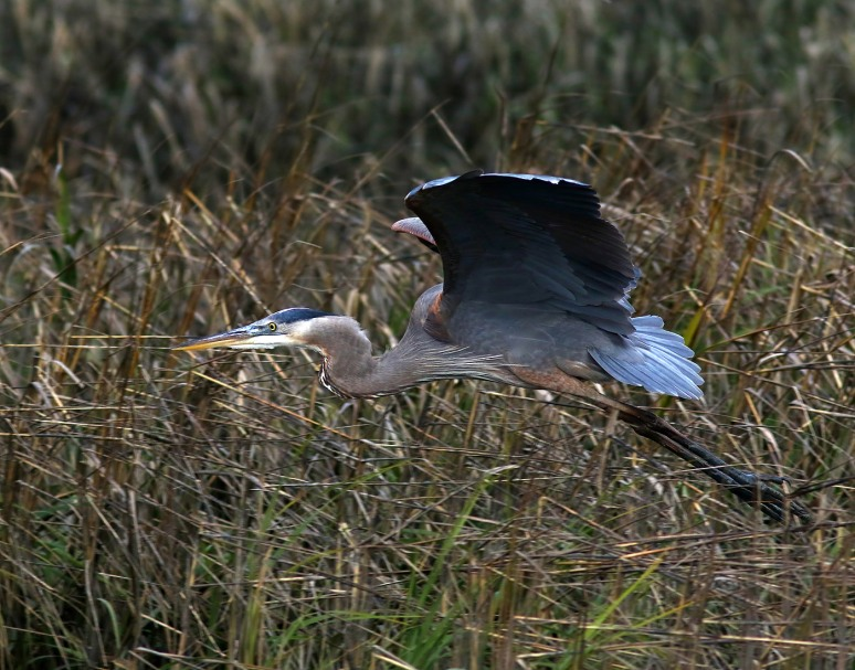 GBH In The Brush
