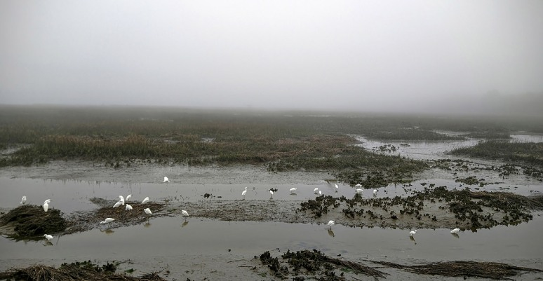 Marsh and Beach in Afternoon Fog