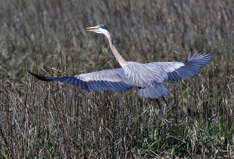 GBH Flies Off To Meet A Friend