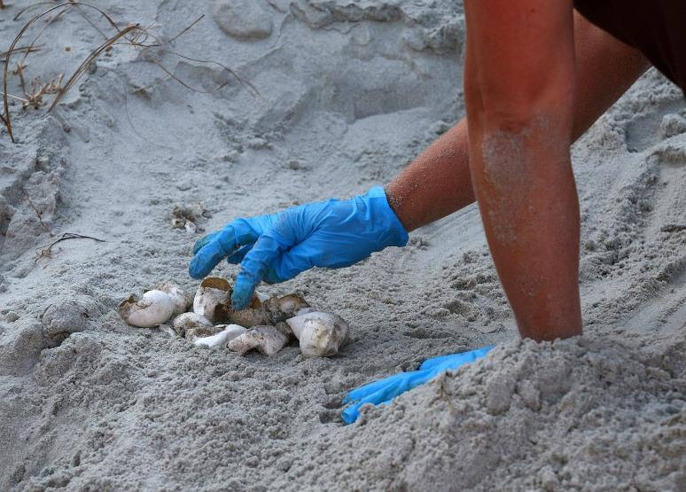 Turtle Nest Inventory