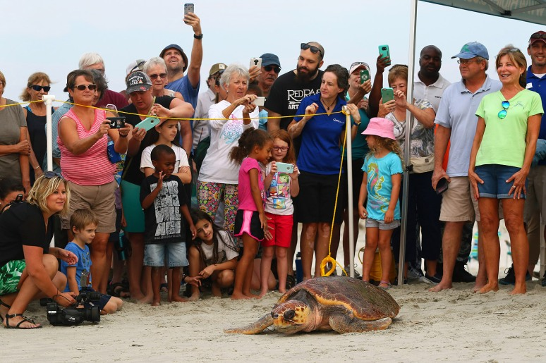 magnolia-sea-turtle-release-at-hbsp-