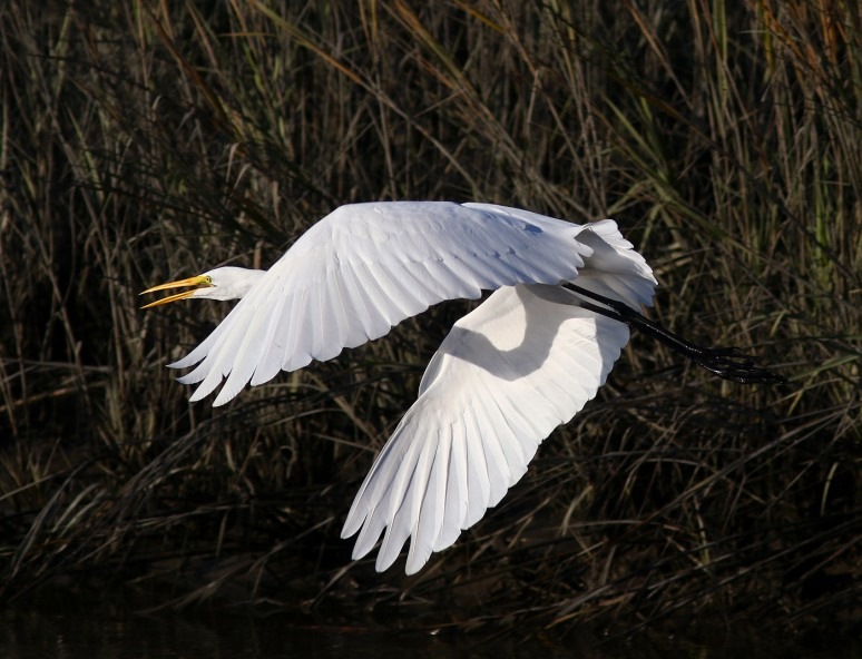 egret-fish-and-fly-