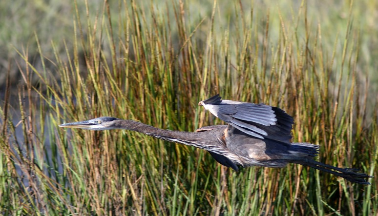 gbh-stretched-out-flight