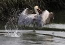 big-bird-big-splash